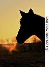 pferd, nacht
