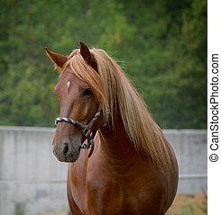 pferd, natur