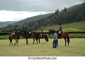 pferd, park, prüfungen, dressage