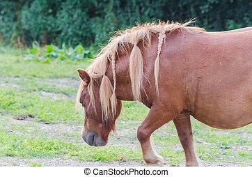 pferd, pasture.