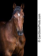 pferd, porträt, auf, schwarz
