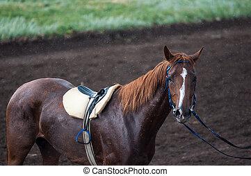 pferd, racing.