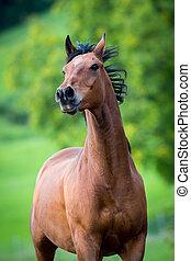 pferd, rennender , auf, grün, hintergrund.