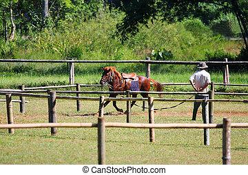 pferd, rennender