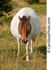pferd, schwanger