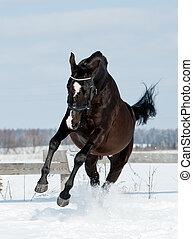 pferd, schwarz, sprünge