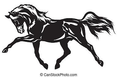 pferd, schwarz, weißes