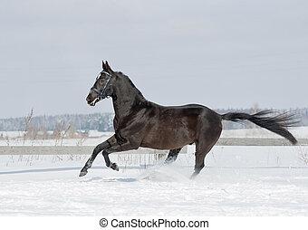 pferd, schwarz, winter