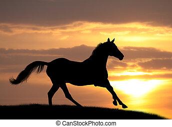 pferd, sonnenuntergang