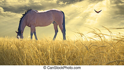 pferd streifen, in, feld