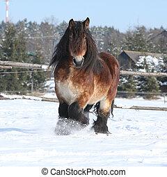 pferd, tiefgang, schnee, langer, rennender , mähne, ...