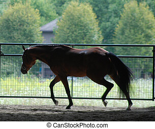 pferd, traben