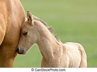 pferd, und, fohlen