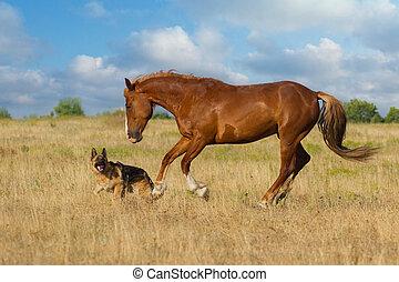 pferd, und, hund lauf
