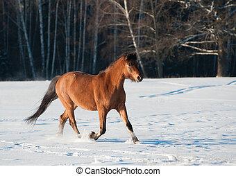 pferd, wald, winter