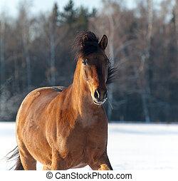 pferd, winter