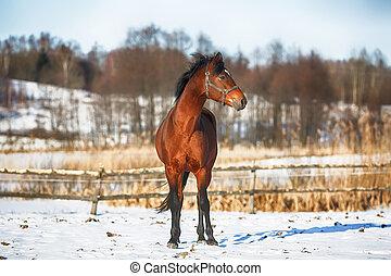 pferd, winter, bucht