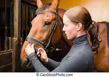 pferd, zaum