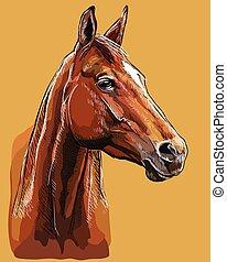 pferd, zeichnung, vektor, porträt, hand, 25