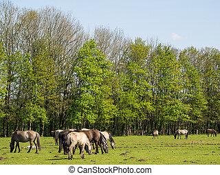 pferde, je, m?nsterland