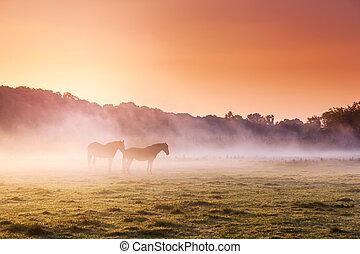 pferde streifend, auf, weide