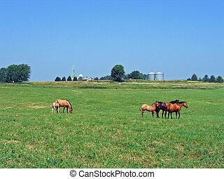 pferde streifend
