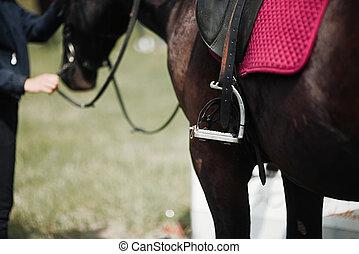 pferdedressur, bewegung, schließen, kugel, auf, seite, ...