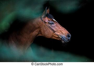 pferdekopf, auf, dunkler hintergrund