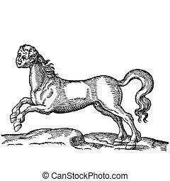 pferdekopf, menschliche