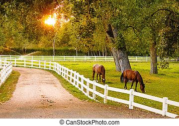 pferden, an, dusk...