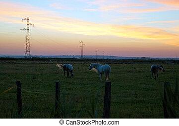 pferden, an, sonnenuntergang