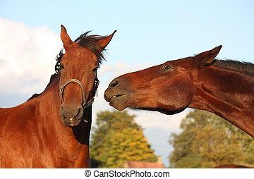 pferden, andere, spielende , zwei, jedes