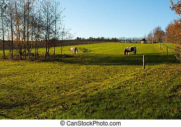 pferden, bauernhof, weiden