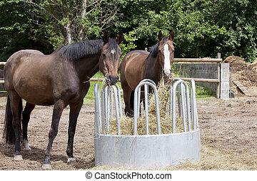 pferden, essen, heu