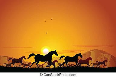 pferden, feld, rennender