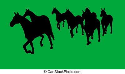pferden, getrennt, schirm, -, grün, galoppieren