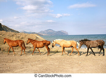 pferden, herde