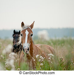 pferden, in, feld
