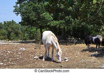 pferden, paddock., weiden