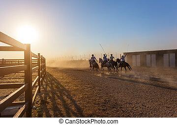 pferden, rennender , in, korral, an, sunset.