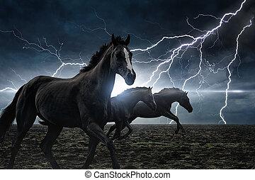pferden, rennender , schwarz