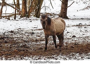 pferden, schöne , winter, weiden, kalte , tag