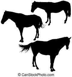 pferden, silhouetten