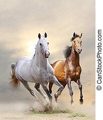 pferden, staub