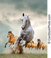 pferden