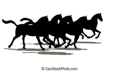 pferden, viele, silhouette
