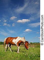 pferden, wiese, weiden