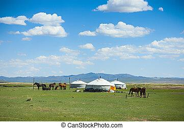 pferden, yurts, mongolia