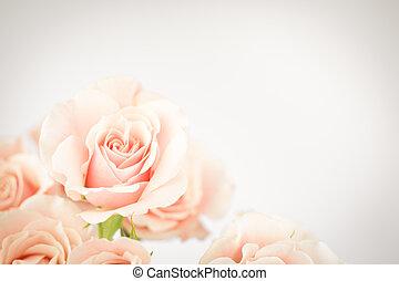 pfirsich, cluster, rose, vignette