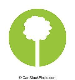 pflanze, ökologie, baum, symbol